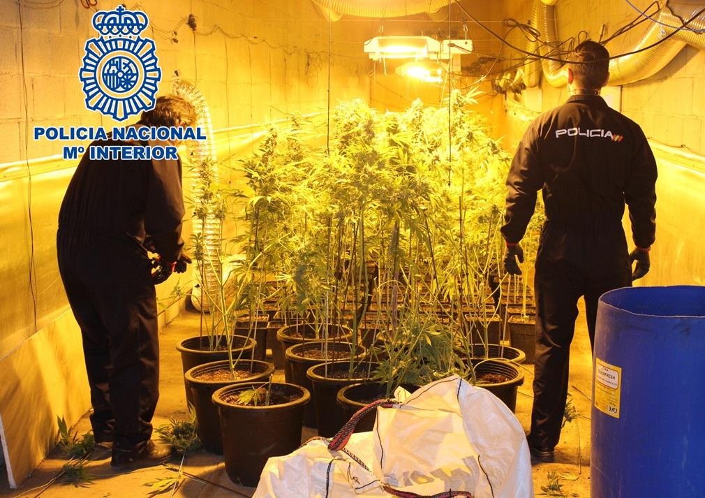 Desmantelado en Granada y Atarfe dos naves con más de 2.000 plantas de marihuana y recuperado un vehículo de alta gama