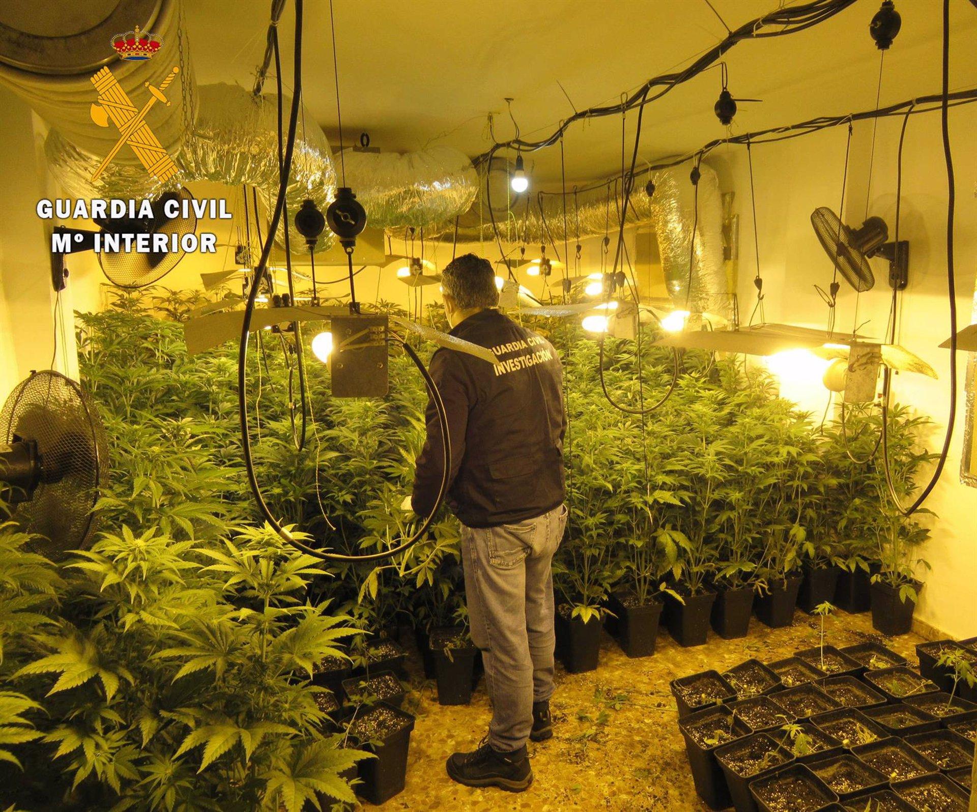 La Guardia Civil desarticula cuatro centros de producción de marihuana