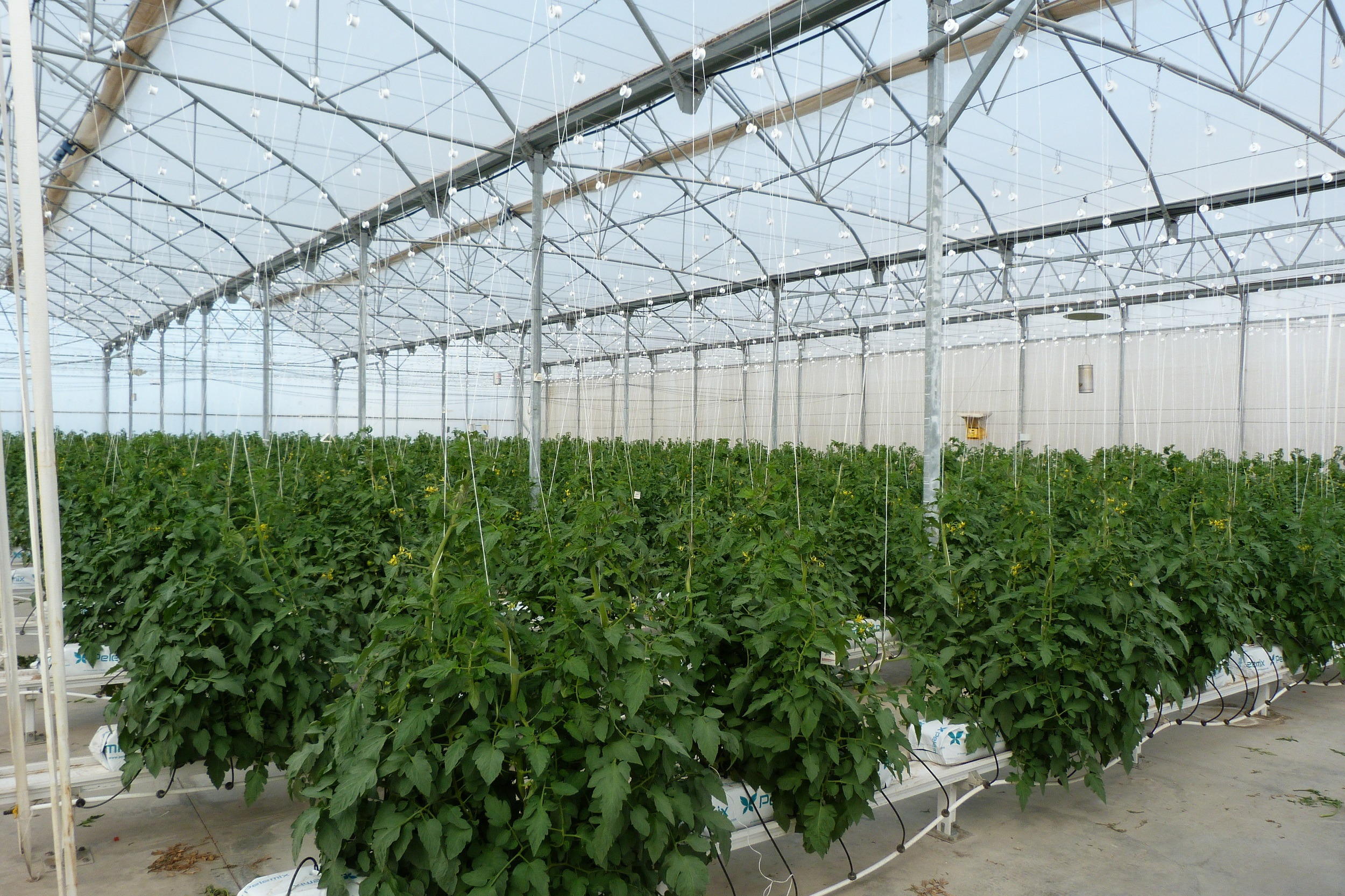 Extenda apuesta por Kazajistán y Uzbekistán como mercados estratégicos para el sector de los fertilizantes agrícolas de Andalucía