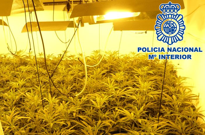 Operación Sofía: 170 viviendas inspeccionadas, 32 enganches ilegales y más de 1.000 plantas de marihuana intervenidas