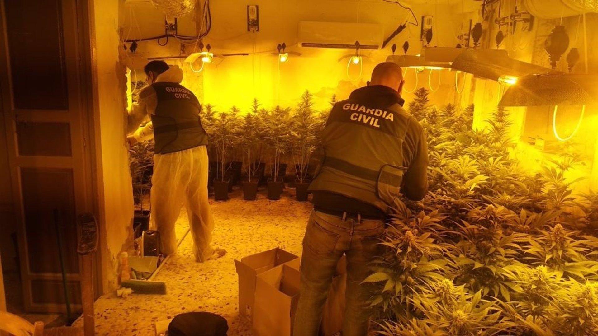 Intervenidas 1.390 plantas en dos centros de producción de marihuana en Cogollos Vega