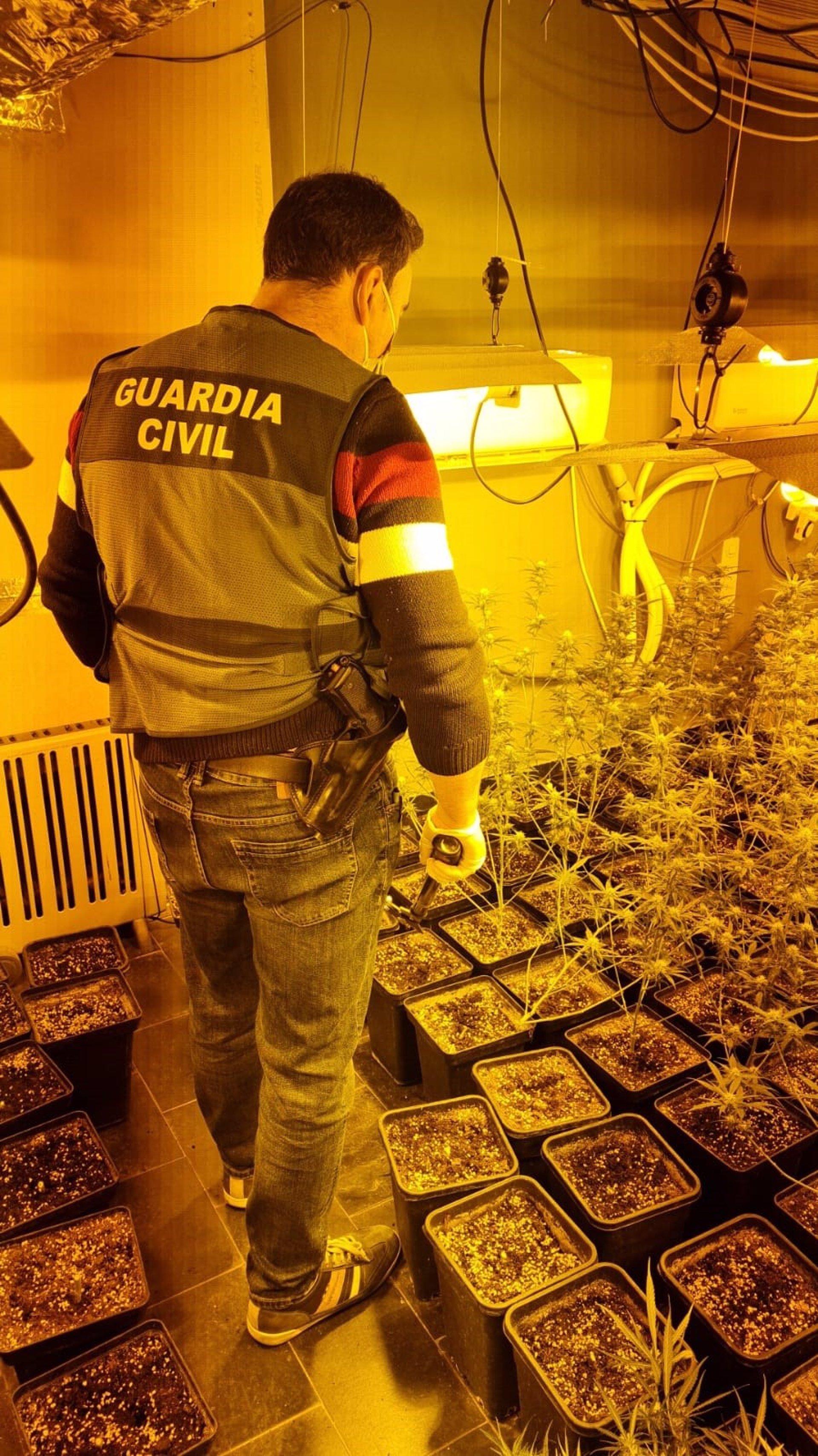 Desarticulados dos centros de producción de marihuana en Huétor Vega y Maracena