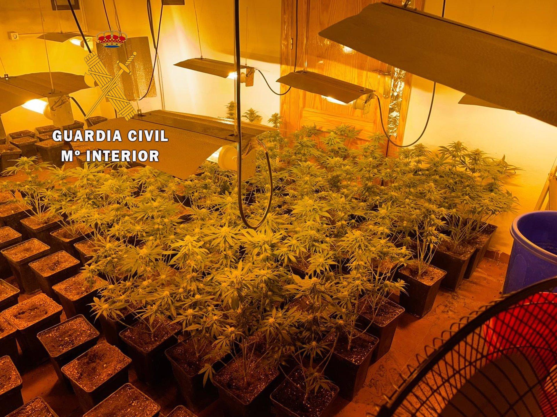 Desarticulados tres centros de producción de marihuana en Santa Fe