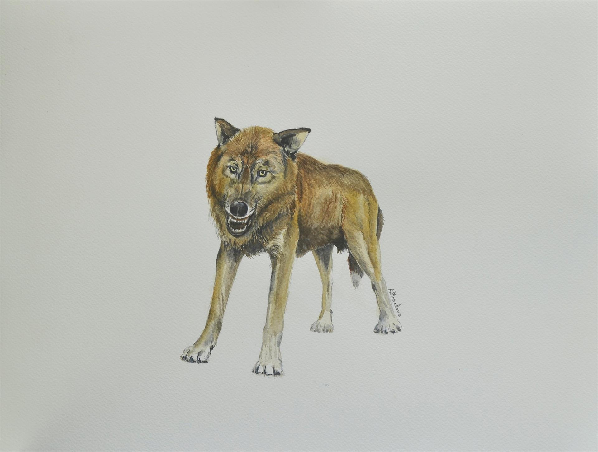 Descubren una nueva especie de pequeño lobo en Orce que vivió hace 1,6 millones de años