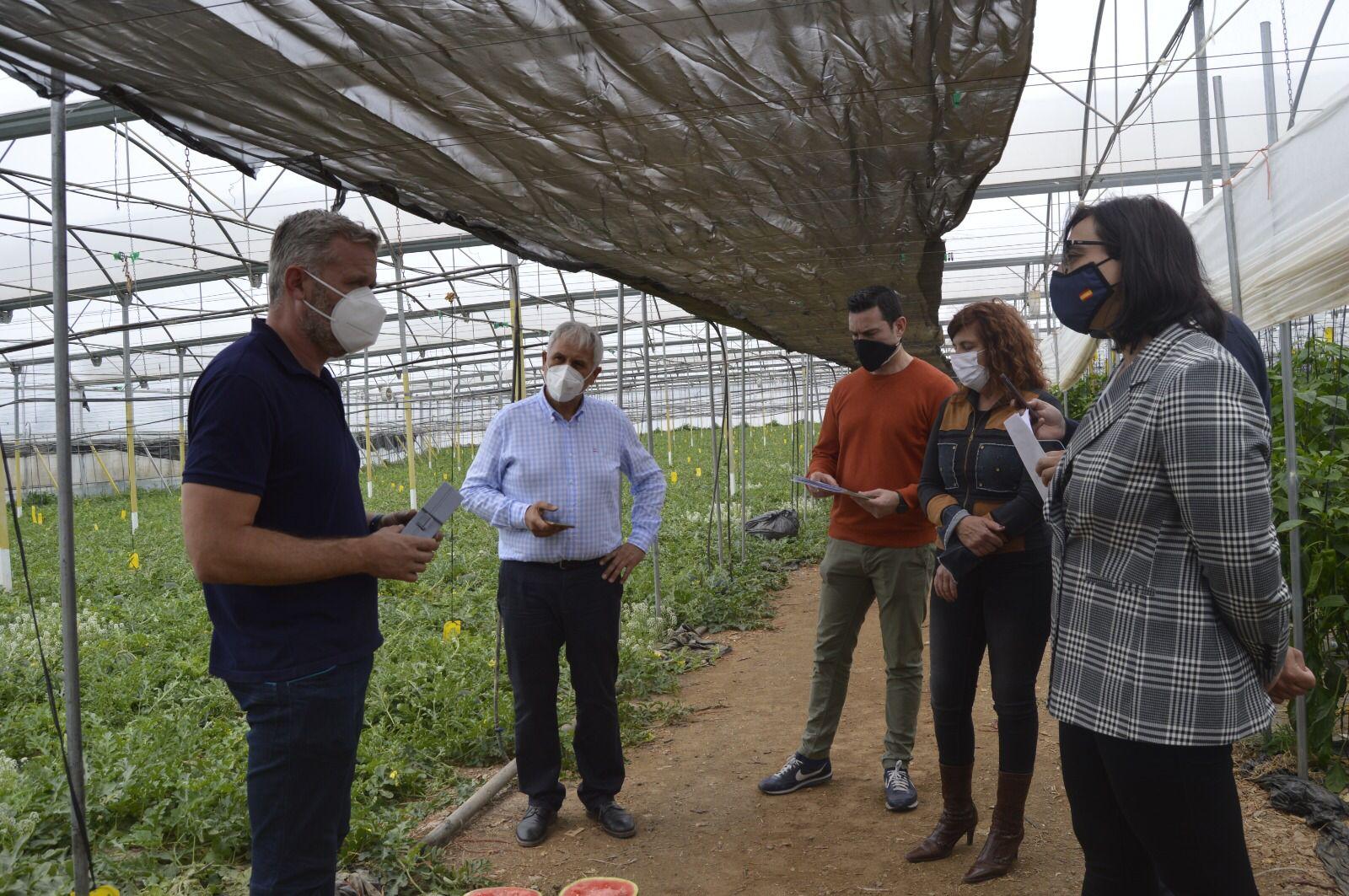 La Junta inicia en Granada la campaña 'No cortes en verde' para la comercialización de melón y sandía con maduración óptima