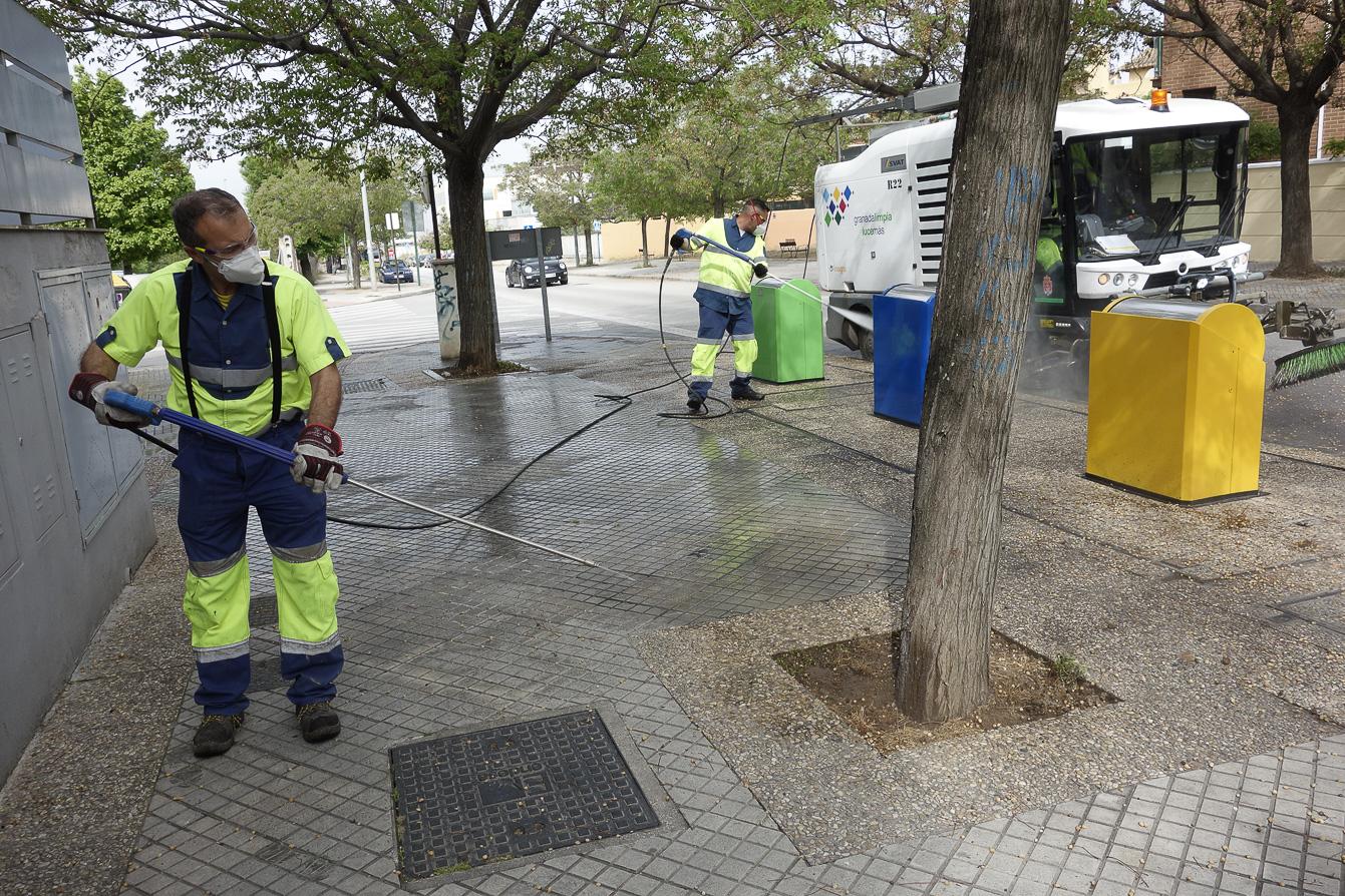 Un equipo de INAGRA limpiará las semillas de la ciudad para evitar la expansión del polen