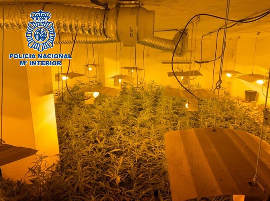 Incautados más de 2.450 plantas de marihuana y cinco detenidos en una operación contra el tráfico de drogas
