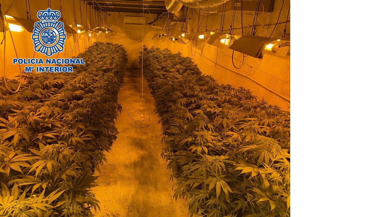 Desmanteladas dos plantaciones de marihuana a gran escala ocultas en una nave alquilada para guardar materiales de construcción