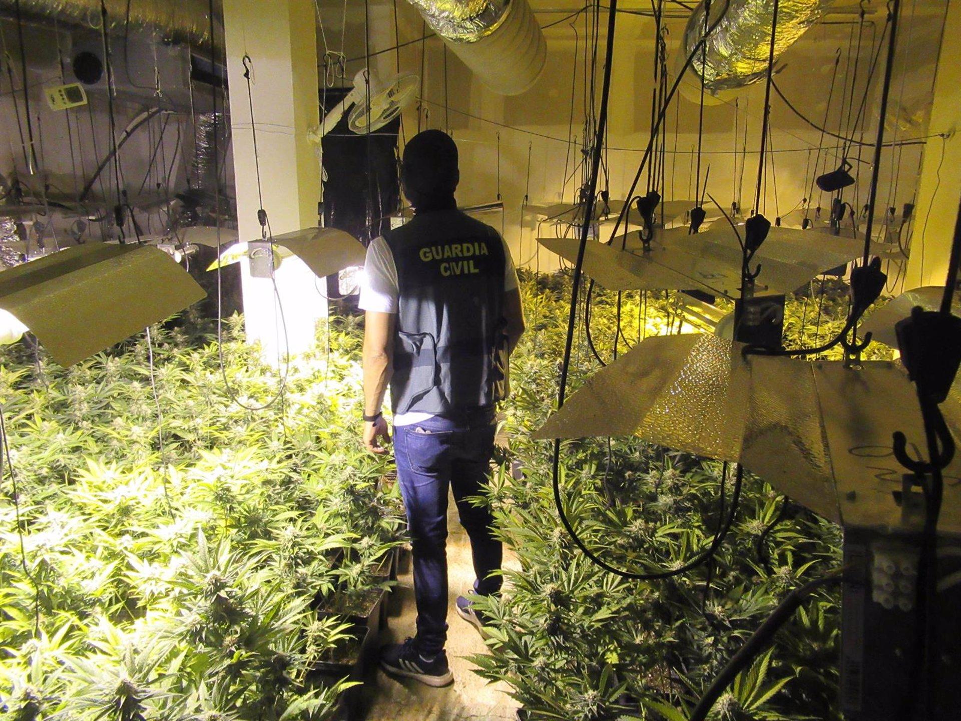 Descubierto un zulo en una vivienda de Alomartes donde se cultivaban 1.100 plantas de marihuana