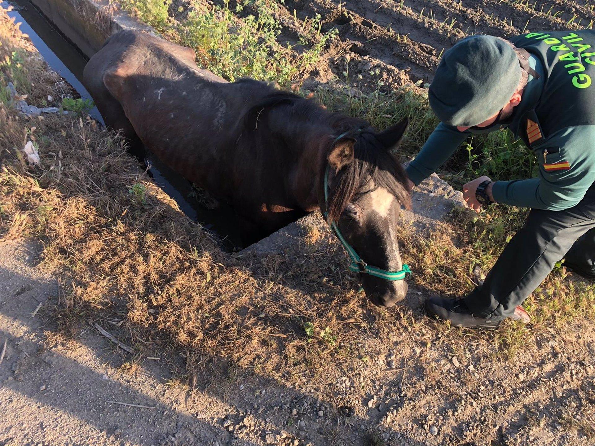 Rescatan un caballo que se había caído a una acequia en las inmediaciones de Pedro Ruiz