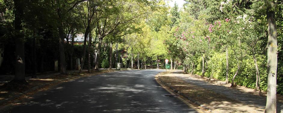 Ecologistas en Acción denuncia la tala masiva de árboles por parte del ayuntamiento en el Serrallo