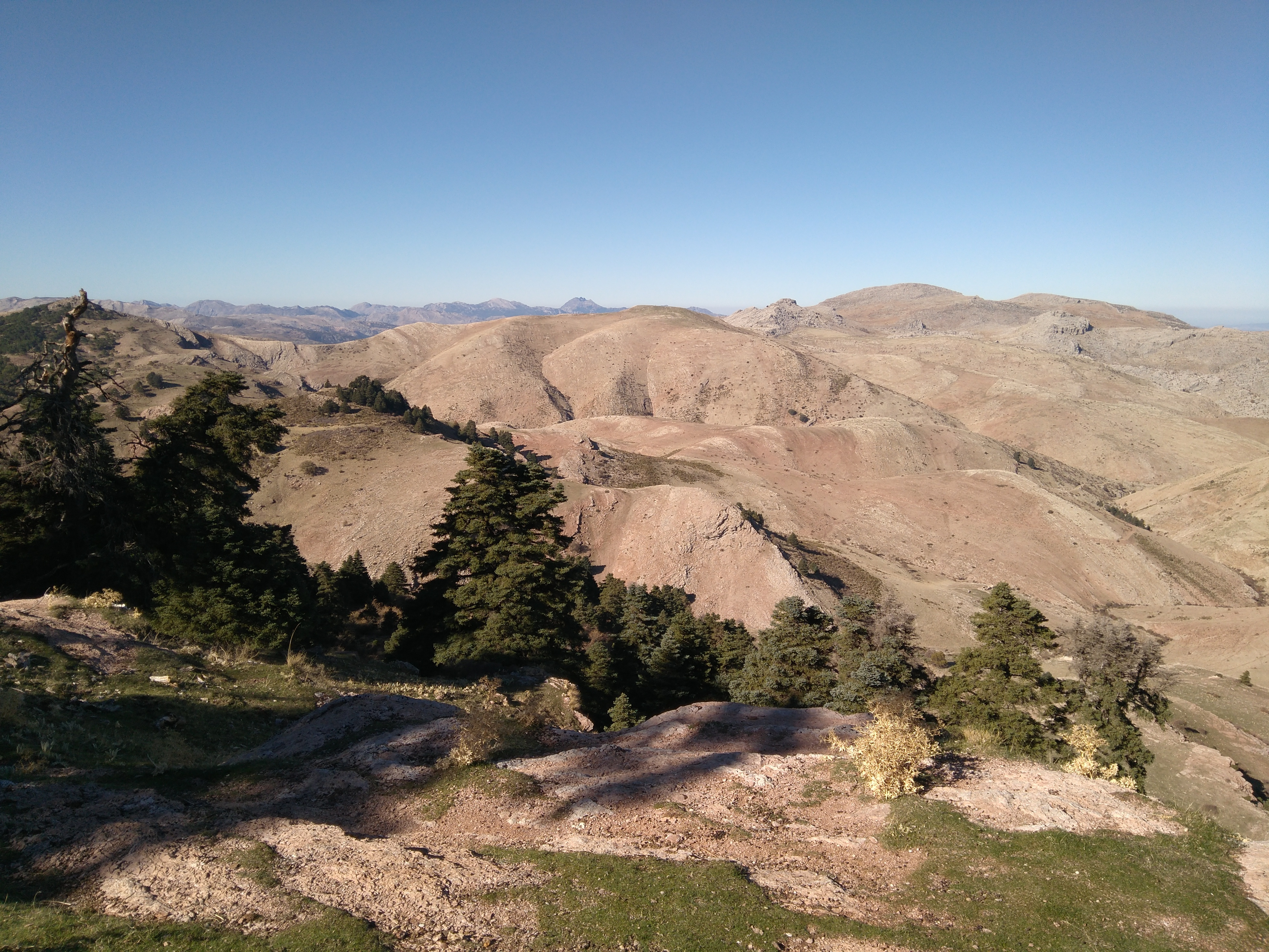 Descubren poblaciones extintas de pinsapos y otras especies arbóreas en el Parque Natural Sierra de las Nieves