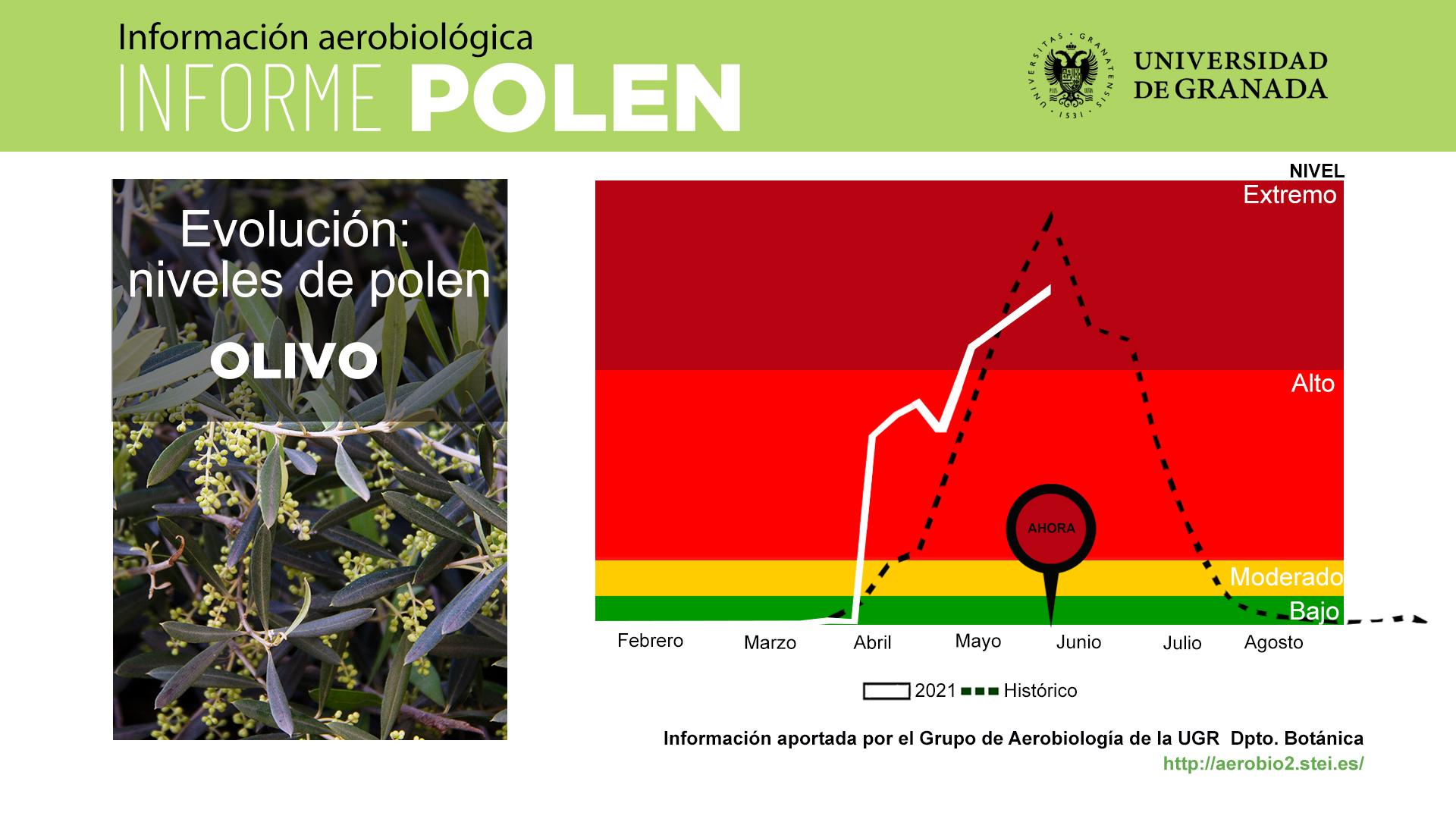 Disminuyen los niveles de polen de olivo y gramínea tras las últimas lluvias