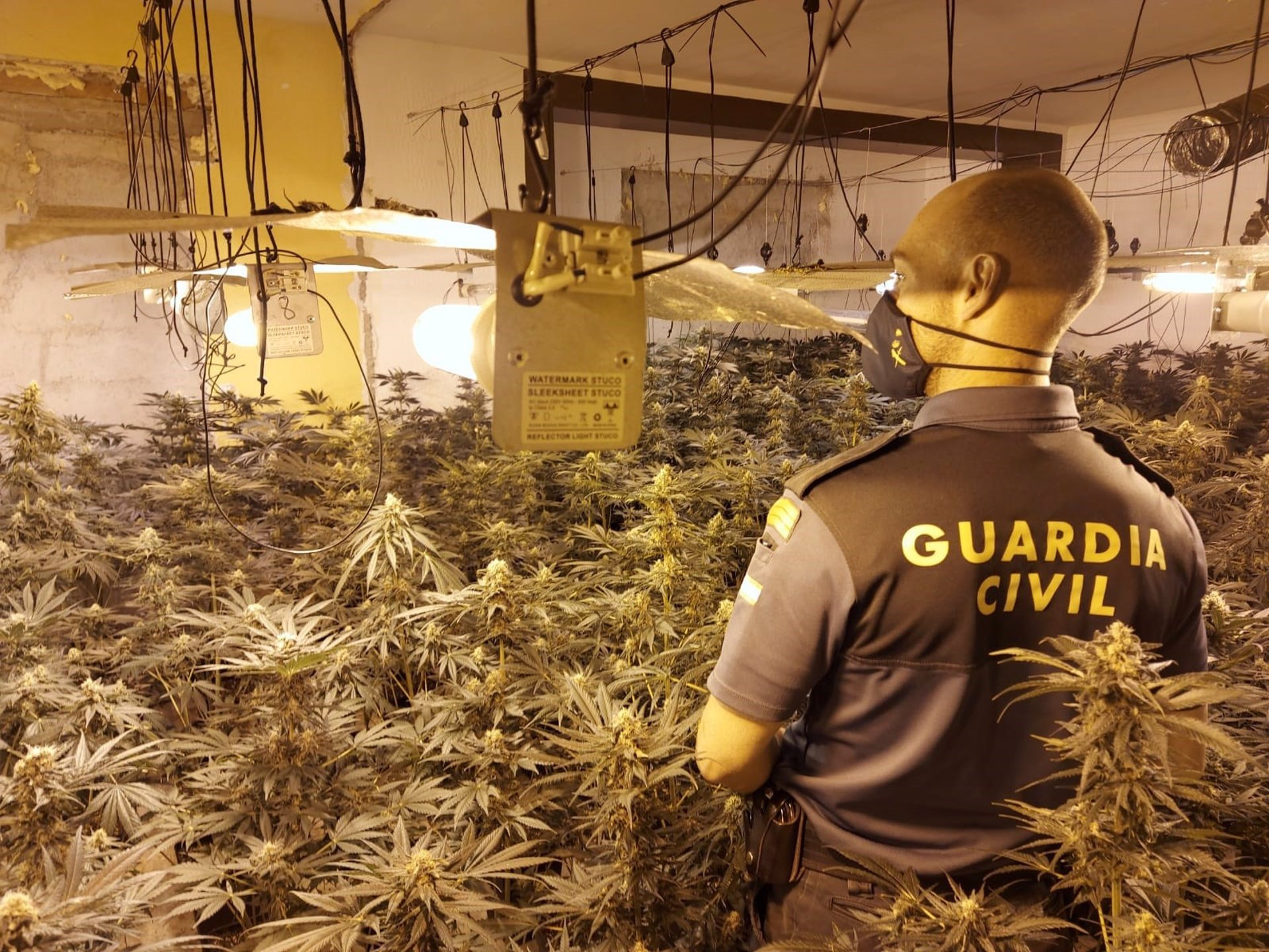 Incautadas 2.937 plantas de cannabis sativa en once centros de producción de marihuana