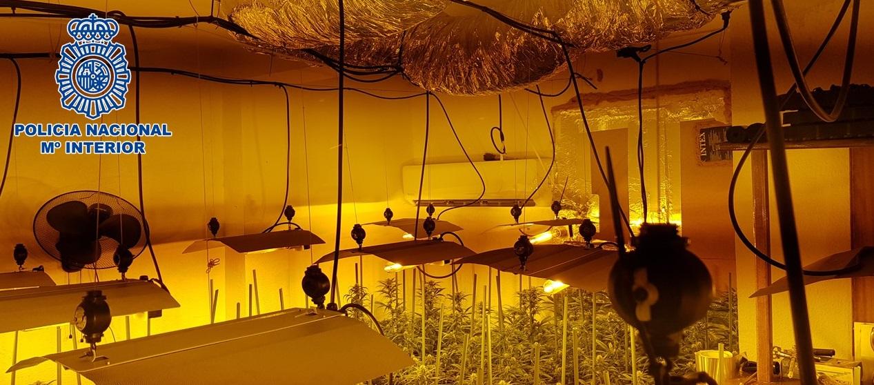 La Policía incauta 480 plantas y 60 gramos de marihuana en tres operaciones en interior de inmuebles del Zaidín y detienen a cinco personas