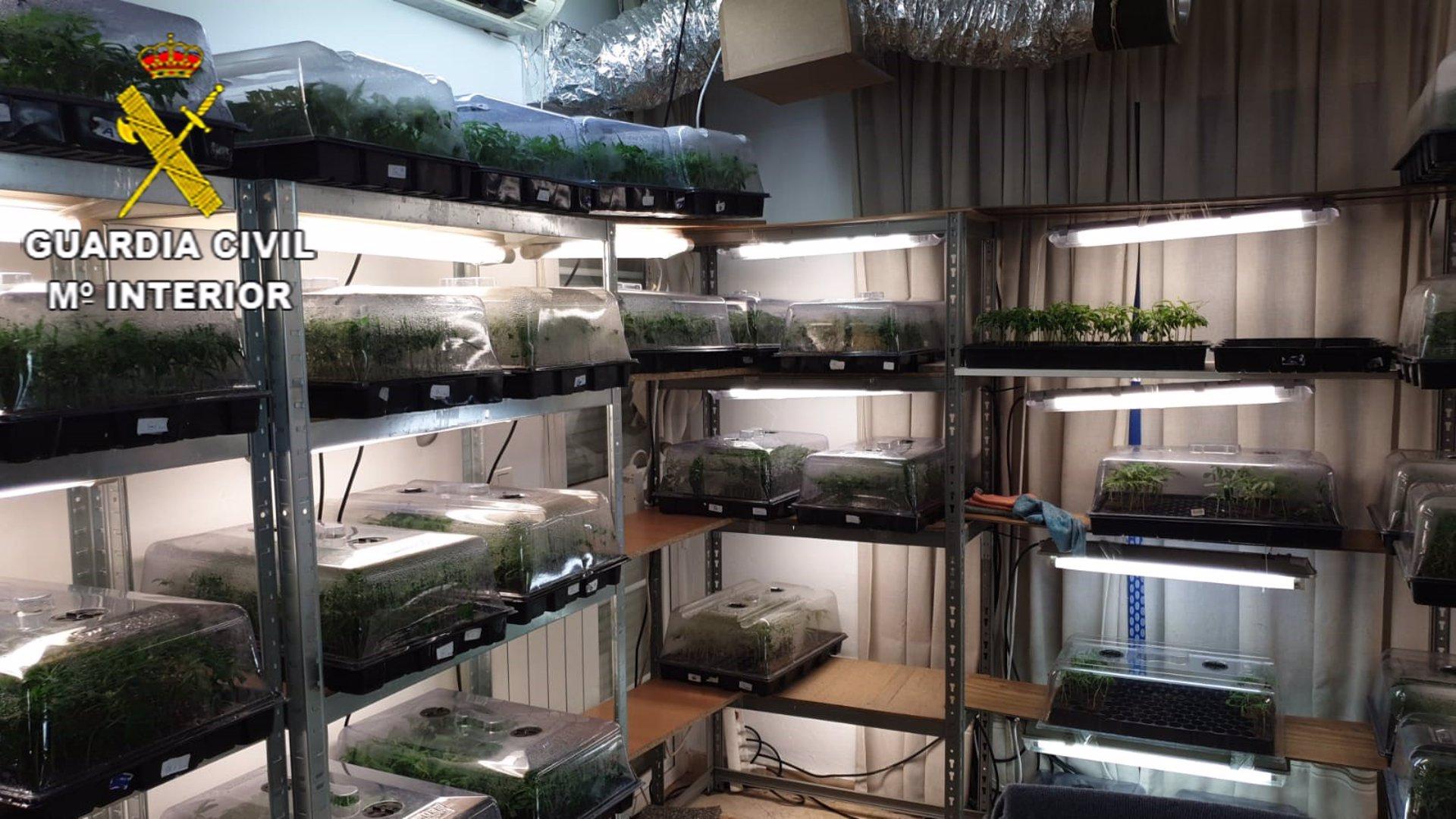 Intervenidas más de 8.500 plantas de marihuana en un centro de producción en Gójar