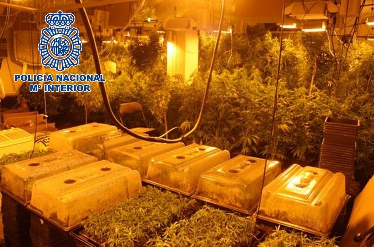 Desmantelan un cultivo interior de marihuana oculto en una lavandería con 3.380 plantas madre