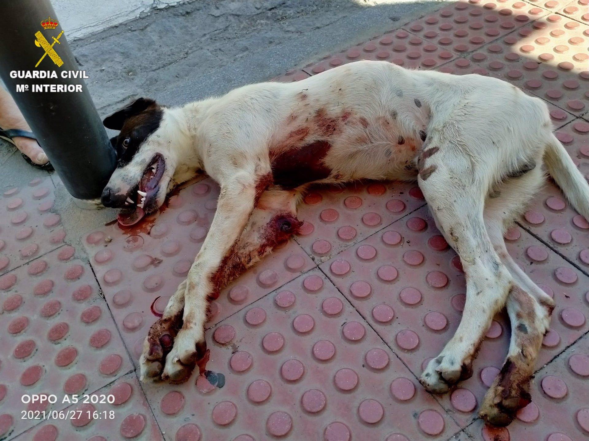 Investigado por maltrato animal un hombre que arrastró a un perro mientras iba en ciclomotor