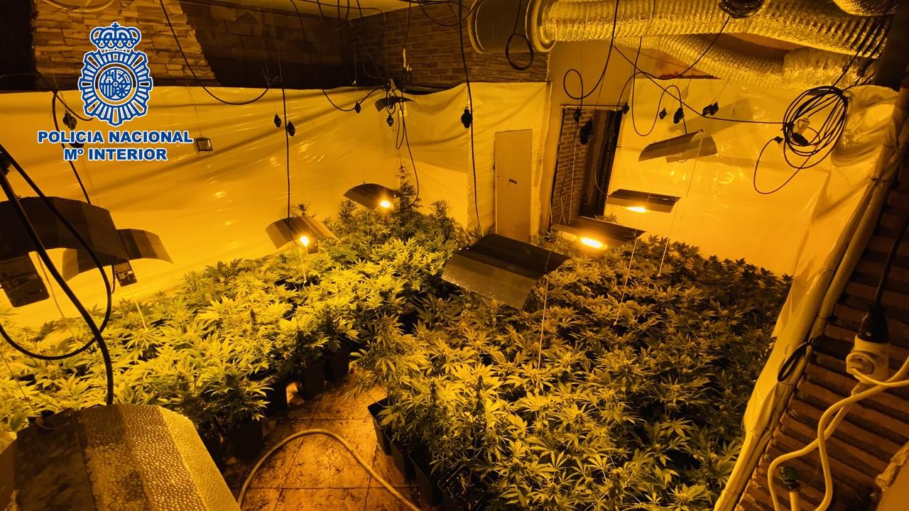 Detienen a los tres miembros de un grupo dedicado al cultivo y elaboración de marihuana a gran escala