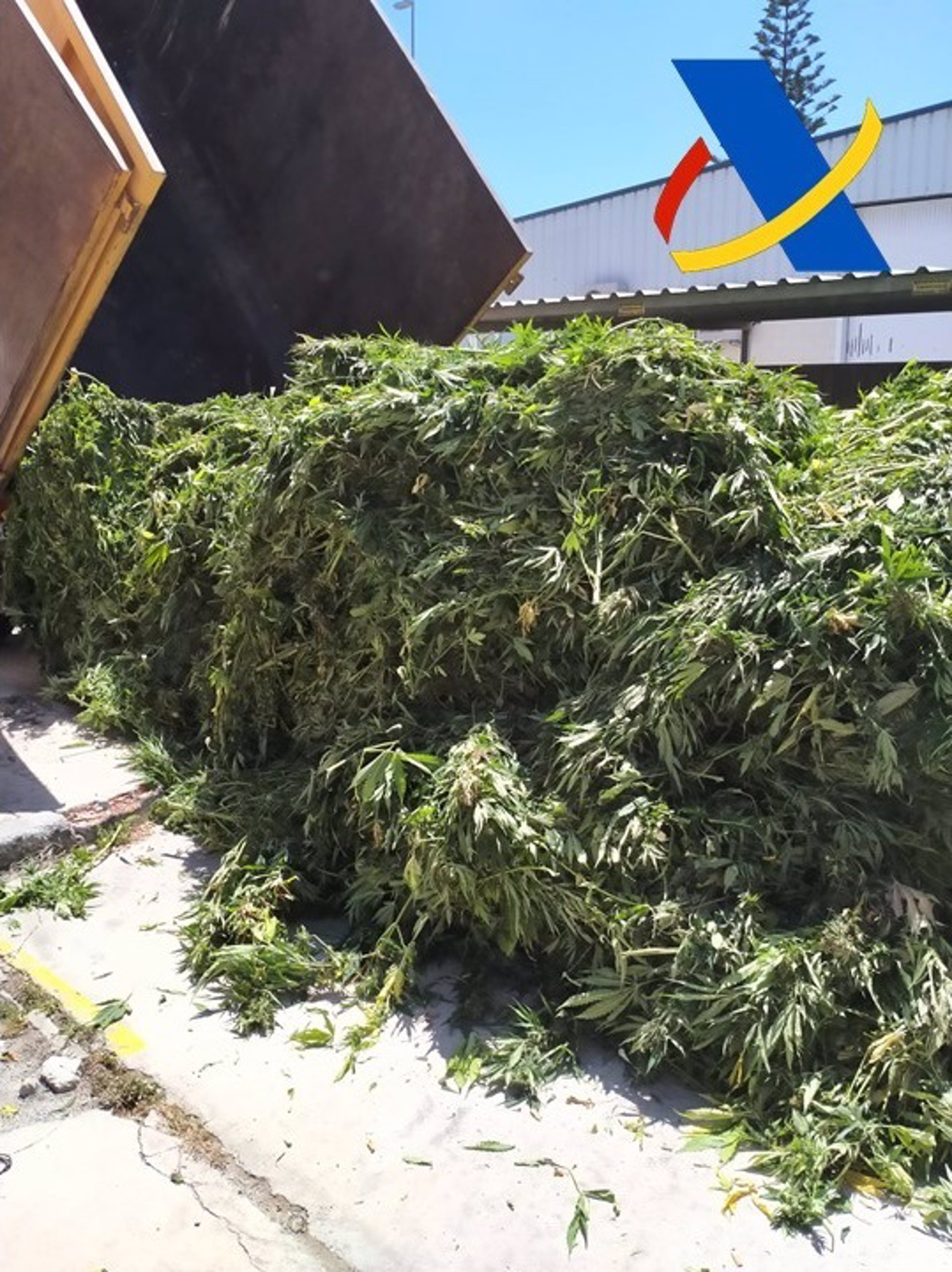 Desmantelada una plantación con 3.000 plantas de marihuana en un invernadero de Vélez de Benaudalla