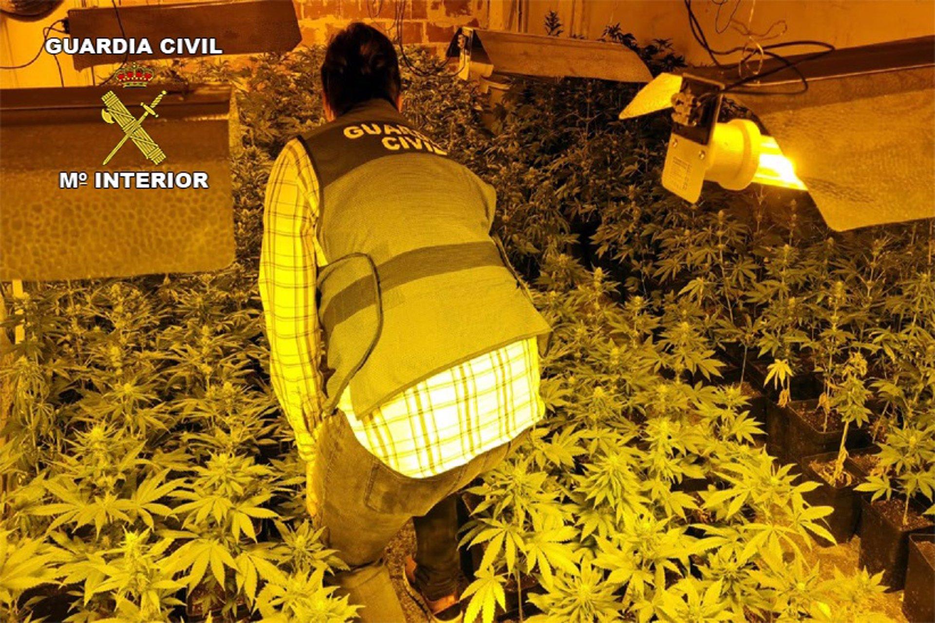 Detenidos tres miembros de una familia tras desmantelar una plantación de marihuana en La Malahá