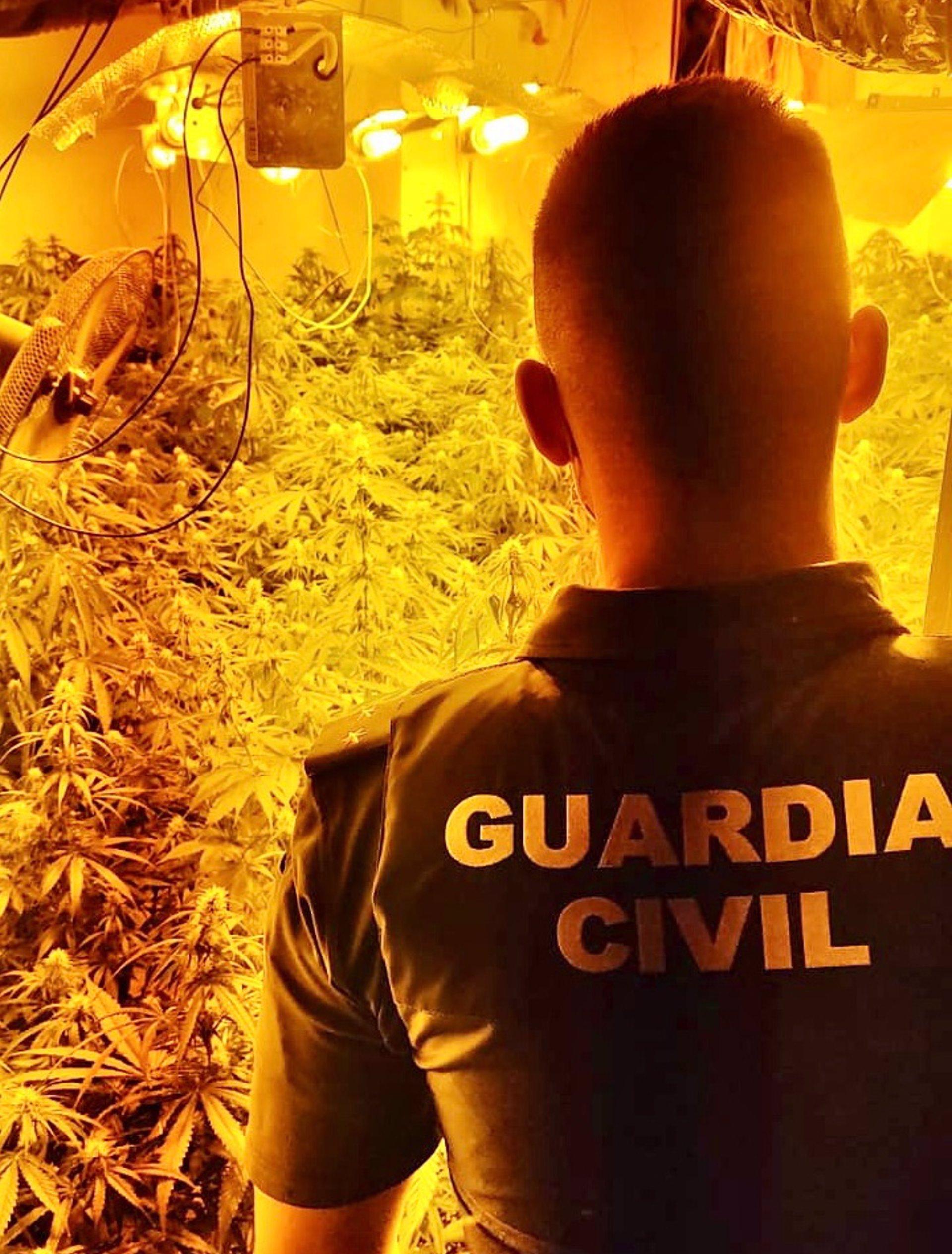 Desarticulados cuatro centros de producción de droga en Iznalloz