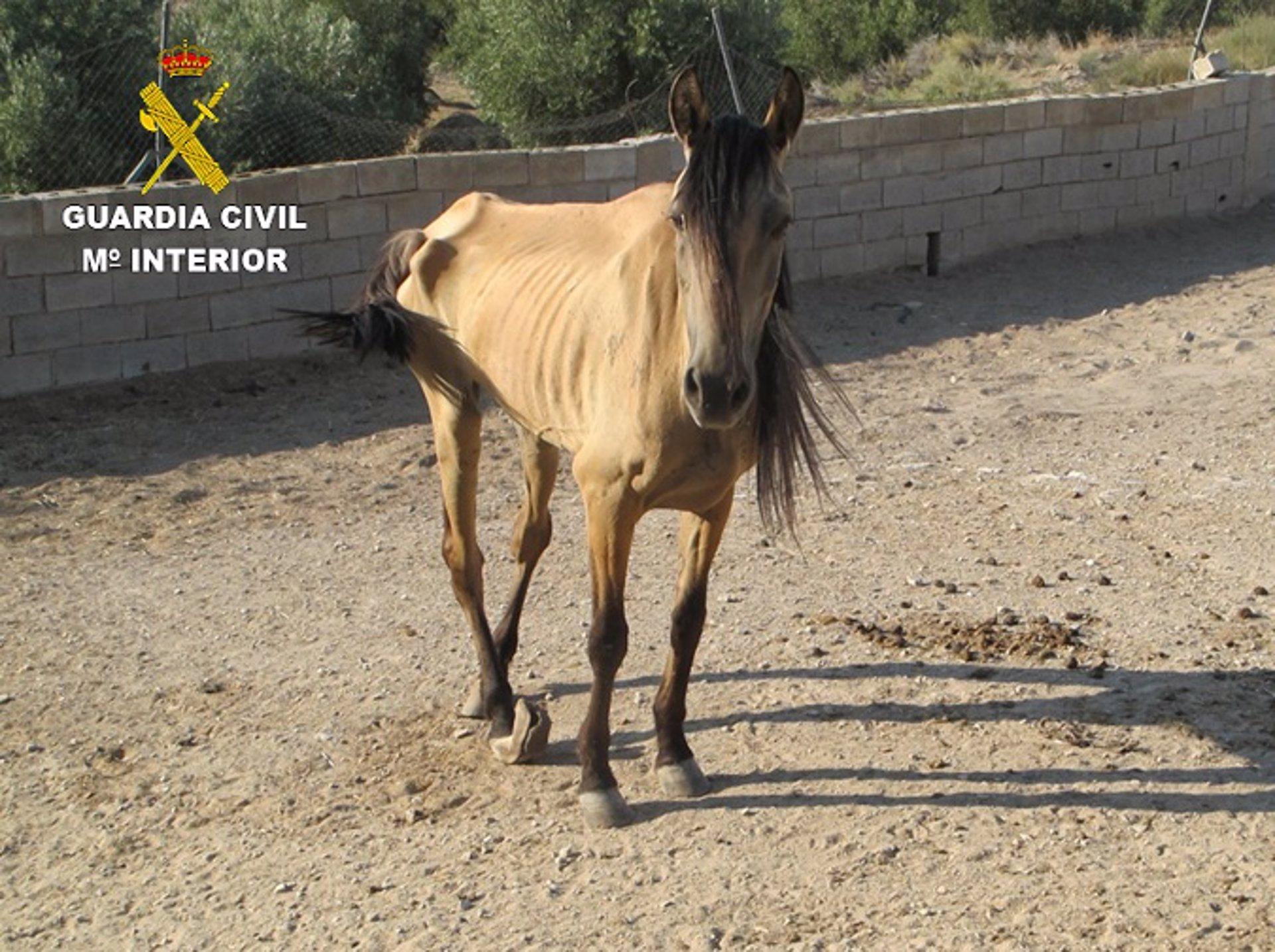 Investigado por maltrato animal de una yegua que llevaba cuatro años sin asistencia veterinaria