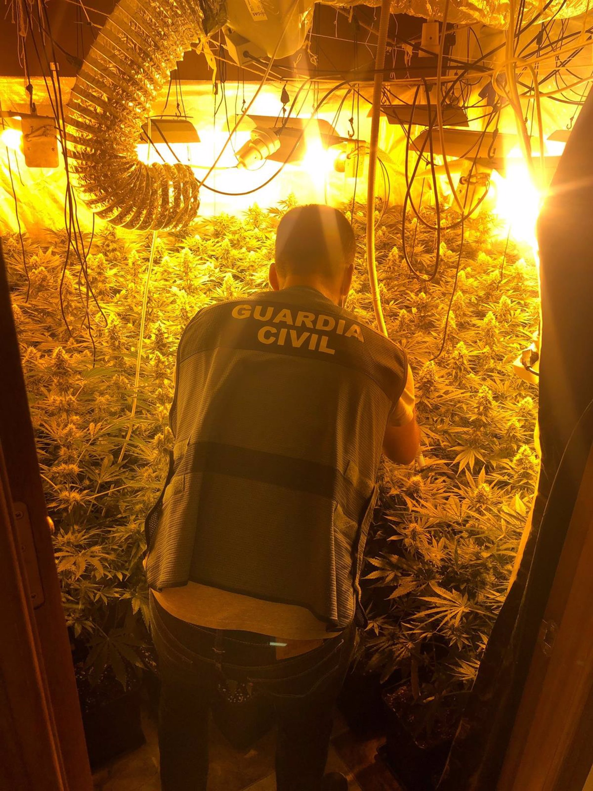 Desarticulados dos plantaciones de marihuana en Cenes y La Zubia, con una septuagenaria investigada