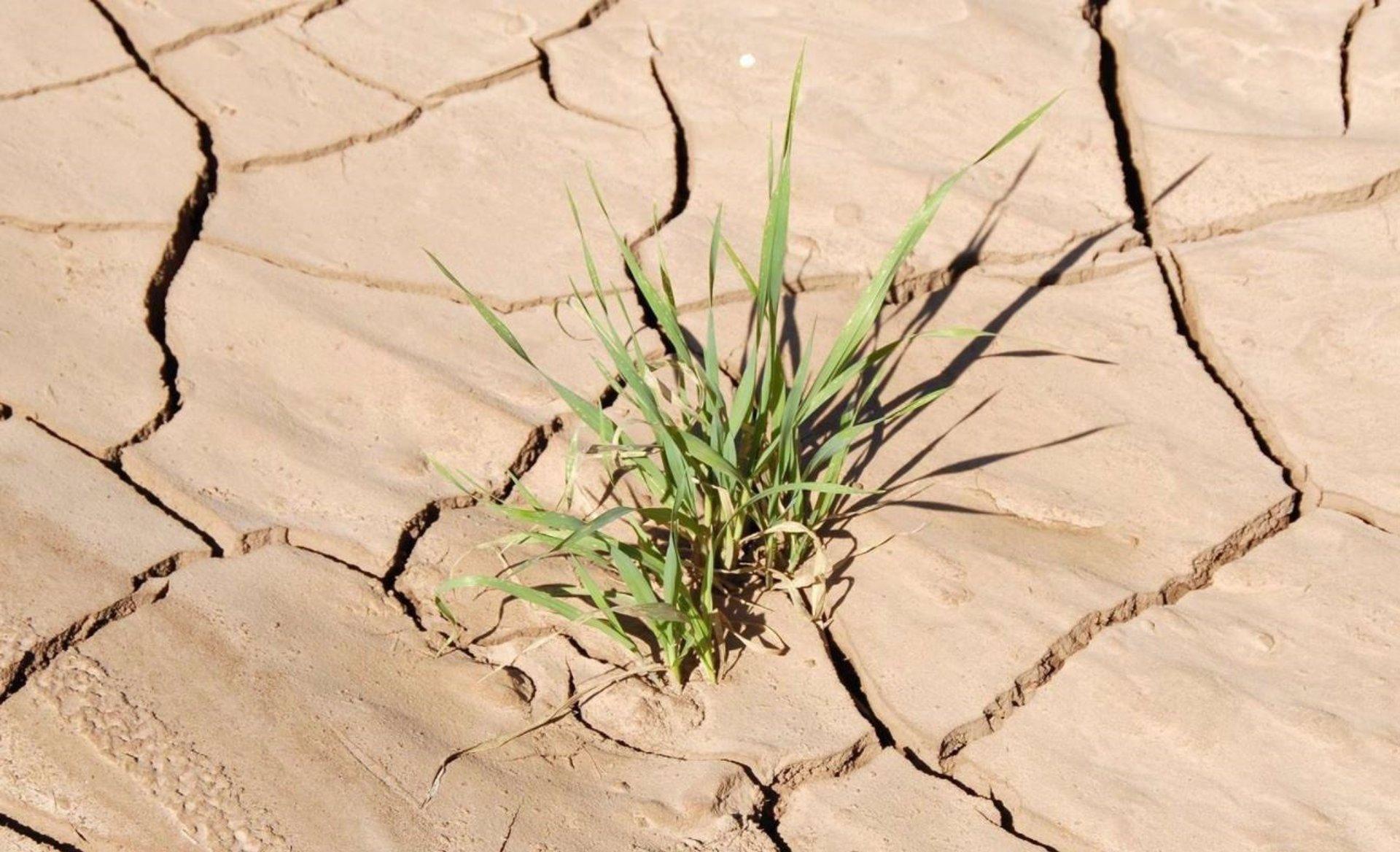 La CHG alerta de que las dos últimas sequías se produjeron «con niveles de reserva como la actual»: por debajo del 30%