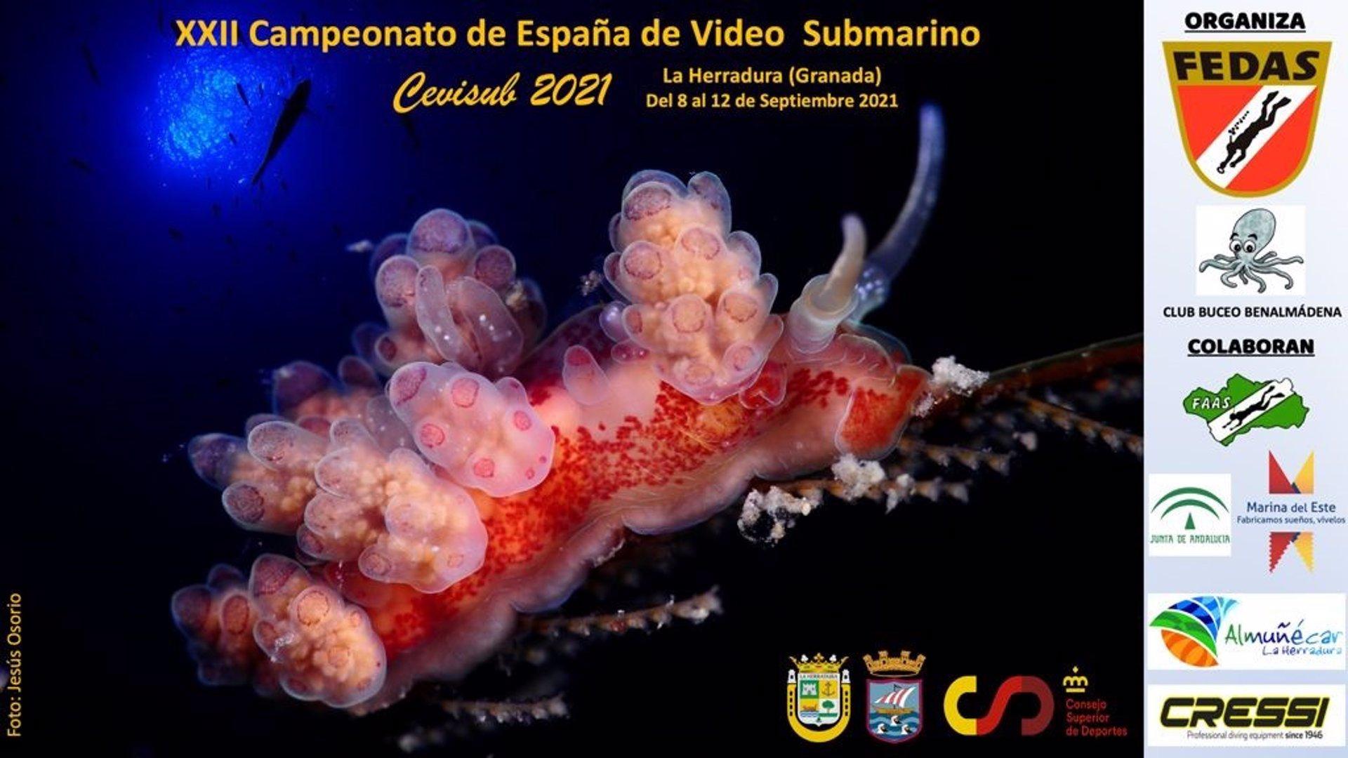 La Herradura acoge desde este miércoles el Campeonato de España de Vídeo Submarino con 14 equipos