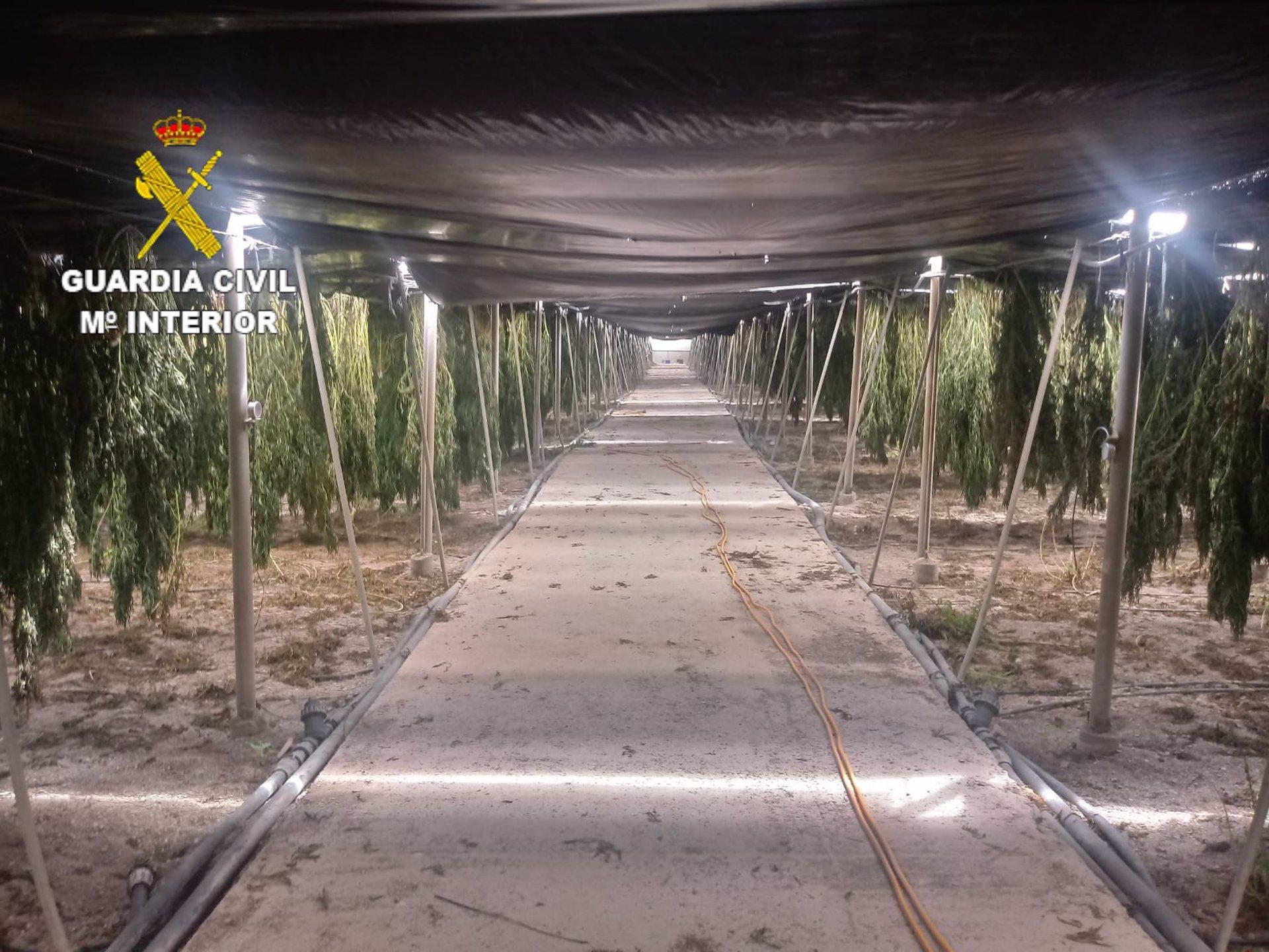 Guardia Civil se incauta de 18.606 plantas de cannabis en dos invernaderos de Sorvilán y Albuñol
