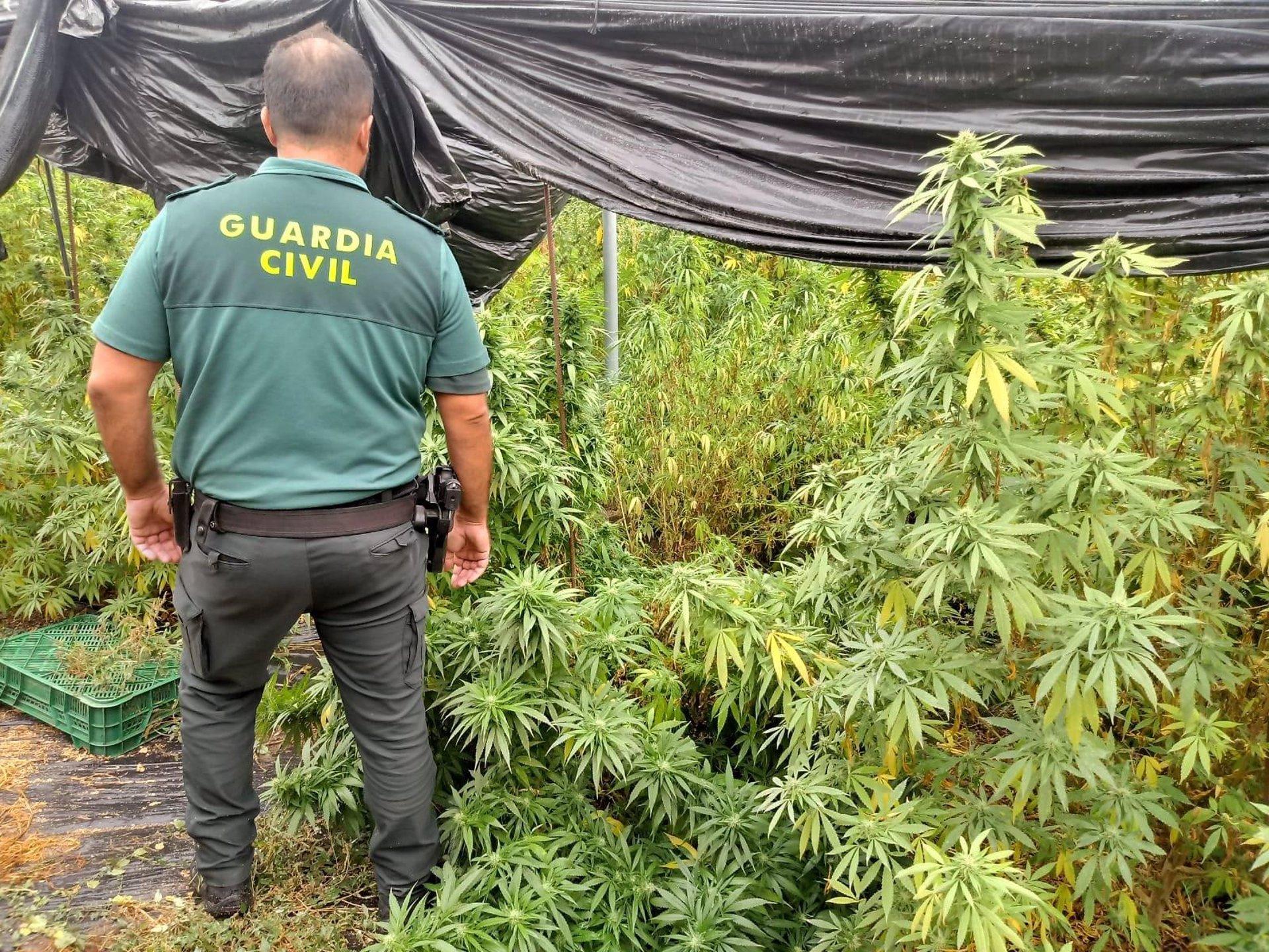 La Guardia Civil sorprende a cuatro narcos mientras «mudaban» plantas de marihuana en Ogíjares