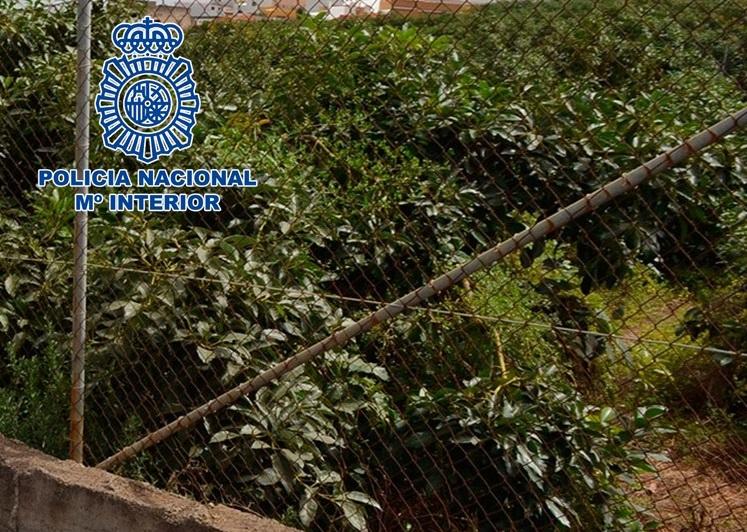 Detenidos cuatro varones en dos actuaciones contra los robos de frutos subtropicales en la vega de Motril