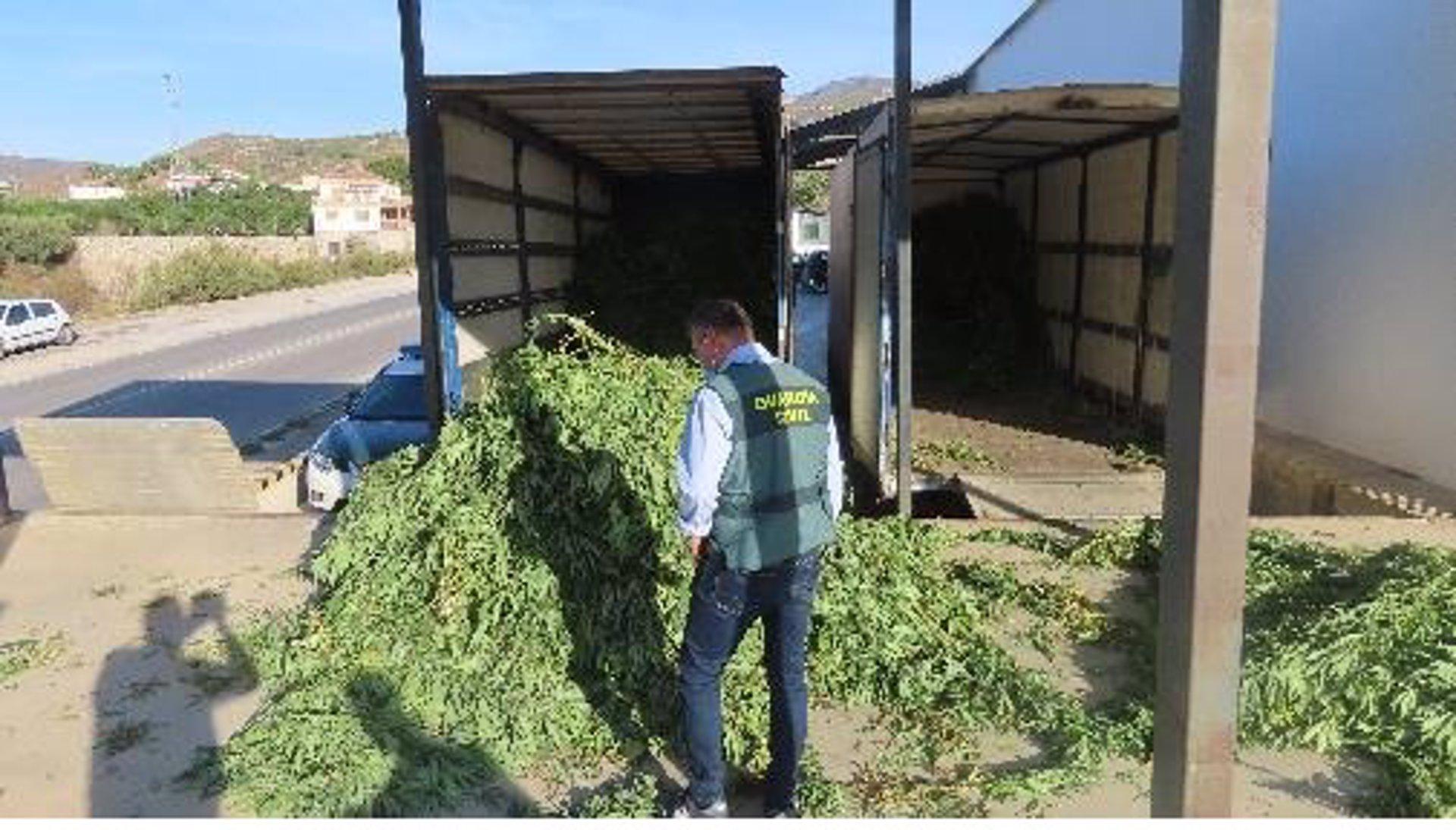 La Guardia Civil se incauta de 3.800 plantas de cannabis sativa en un almacén de Molvízar