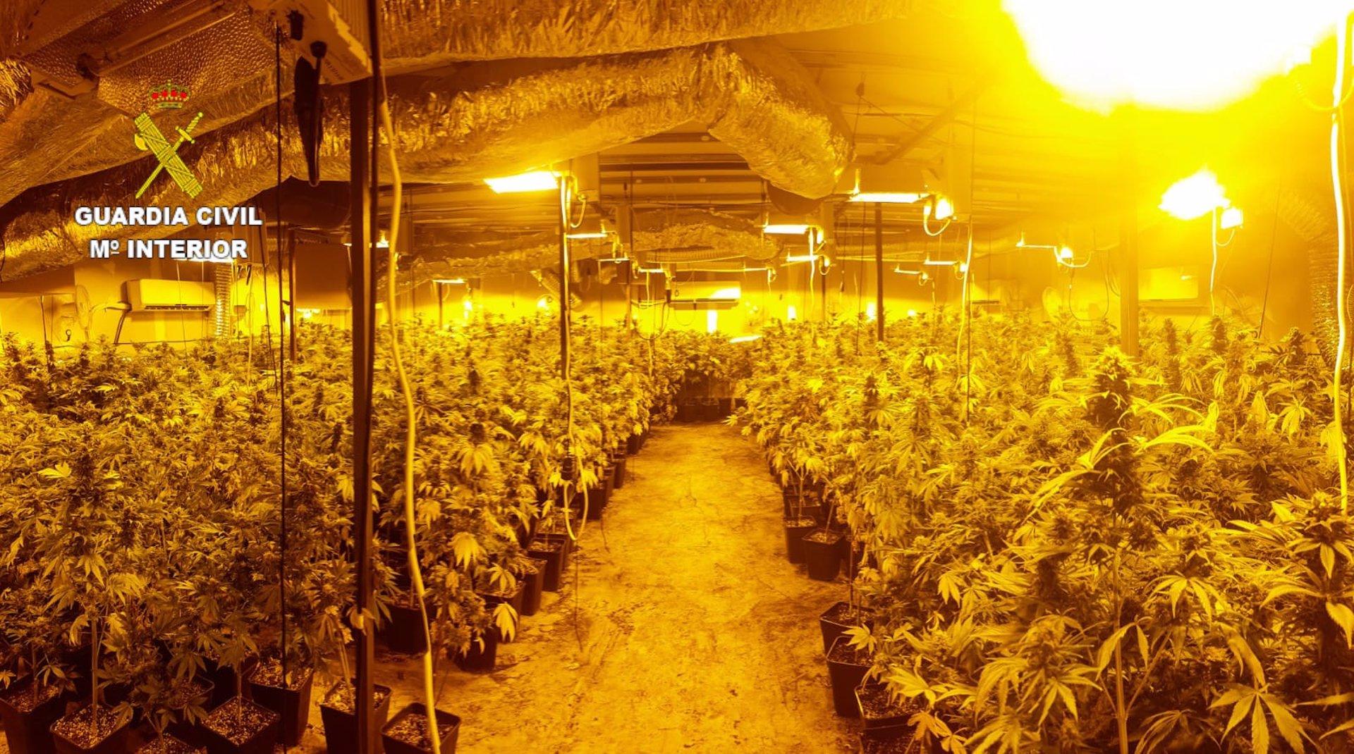 Desarticulado un punto de producción de marihuana en Armilla con más de un millar de plantas